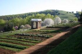 vegetable_garden (1)